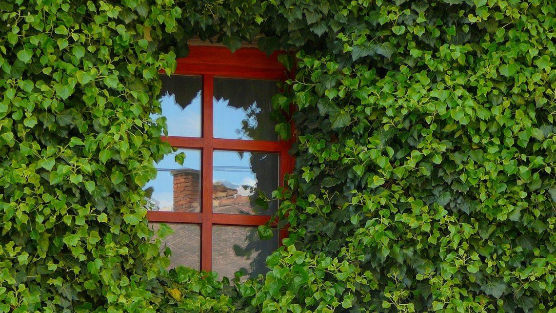 En savoir plus sur l'entretien des fenêtres en bois